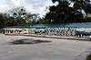 Swampy Gator 02 - Christmas, FL