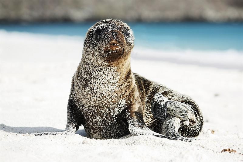 Sea lion pup ~ Espanola