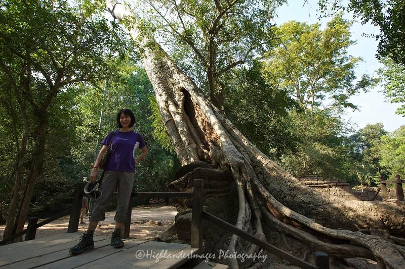 Ta Prohm, Siem Reap, Cambodia