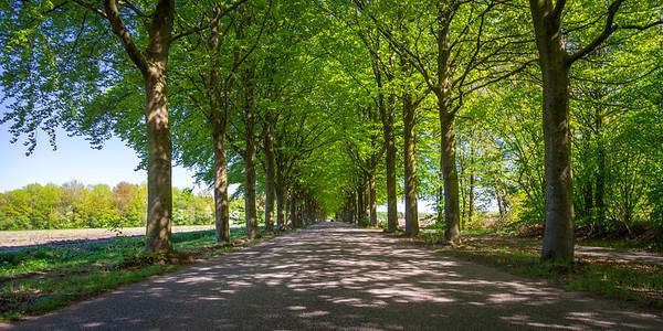 Drenthe Drive