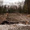 Illegal Logging in Russia
