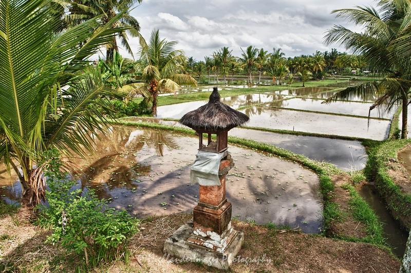 Balinese Rice Paddy, Ubud