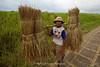 Local Farm Worker, Ubud