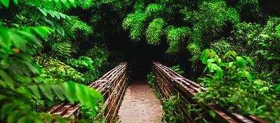 path to bamboo