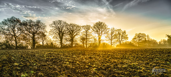Essex Morning