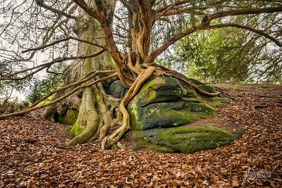 The Rock Walk at Wakehurst 3