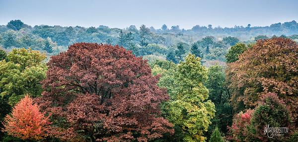 Nymans Treetops Autumn
