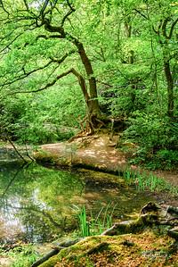B25 Knighton Lake Roots