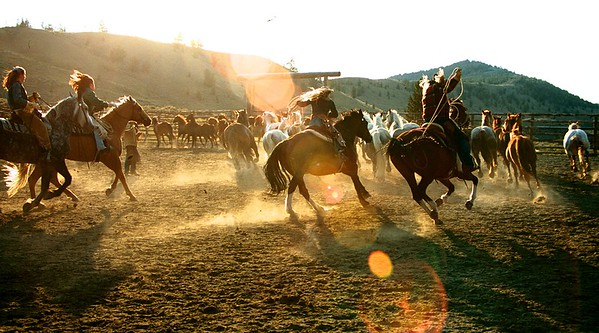 Wrangler Girls - bringing home the heard at sunrise in Dubois, Wyoming - Triangle C Ranch.