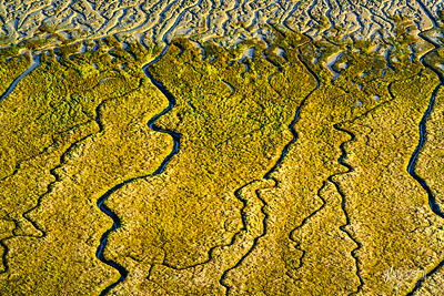 Bradwell Saltmarsh Patterns