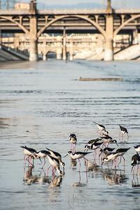 www.albertomesircaphoto.com