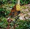 Rusty Robin