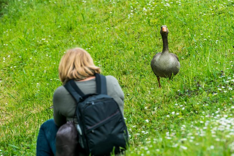 A Duck Model