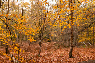 Autumn in Trent Park