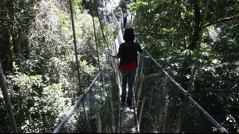 Canopy walk at Poring, Sabah