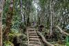 Mesilau Gate Summit Trail, Mount Kinabalu Park, Sabah