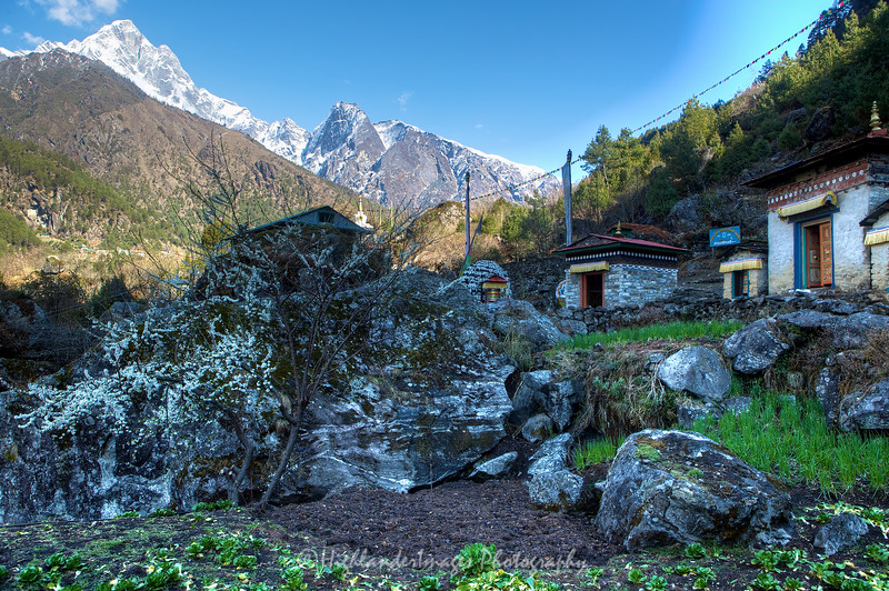 Cabbages, tree blossom, Mani stones and prayer wheel on the trail between Phakding and Lukla.