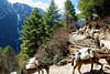 A donkey train heads up on the last section towards Namche Bazaar from Jorsalle.