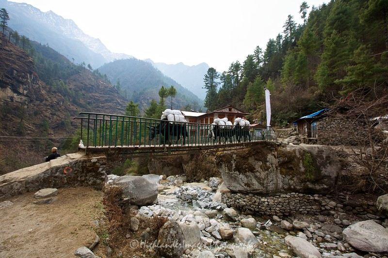 Dzo crossing the bridge at River View Lodge between Phakding and Monjo.