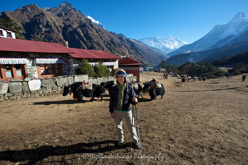 Suit Yoo with yaks making their way through Tengboche.