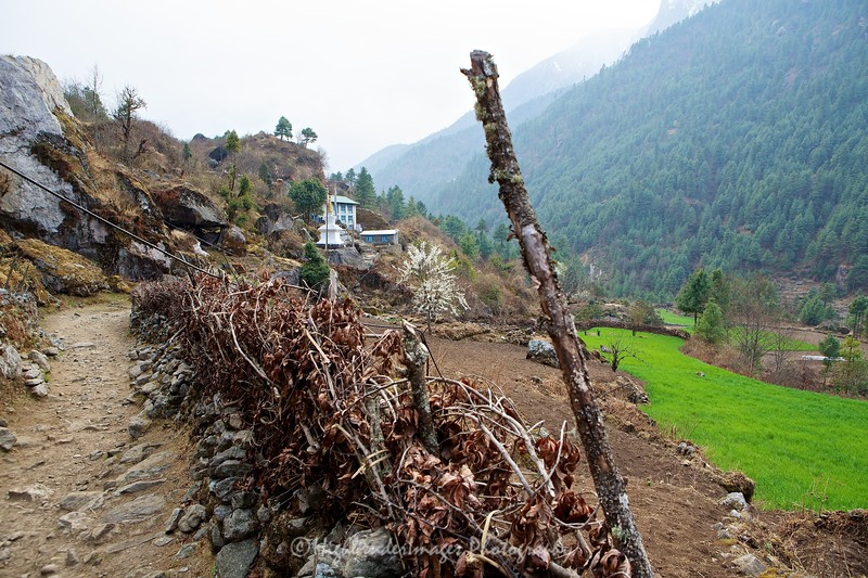 Rice is grown in the stepped fields close to Dudh Kosi river between Lukla to Phakding