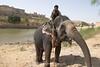 Elephant at Amer Palace, Jaipur, India