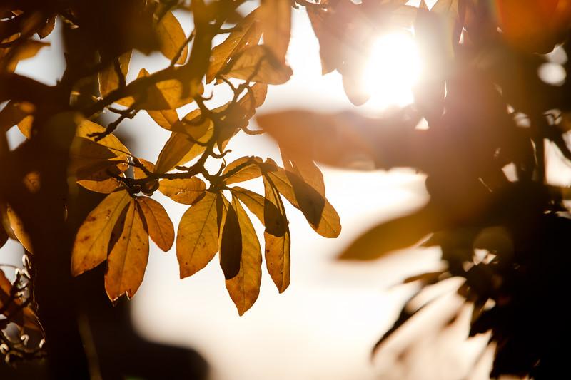 Sunflare.JPG