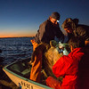 Lead NOAA sea turtle scientists Jeff Seminoff and Tomo Eguchi, with their protégé Joel Schumacher, prepare to transfer a sea turtle to the beach to examined and tagged. Image taken under NMFS permit # 16803