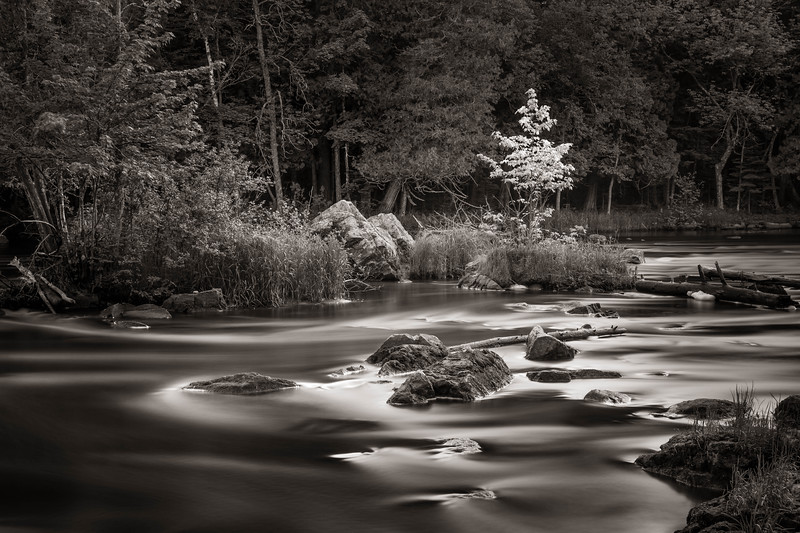Spring and Early Morning Light on the Wolf River