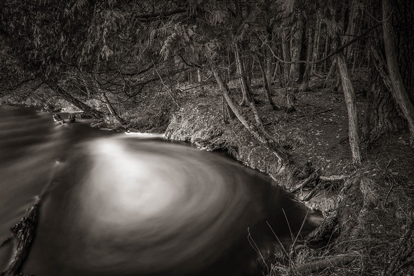 Whirlpool and Bowing Cedars - Wolf River, Wisconsin