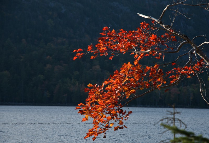Fall at Jordan Pond