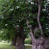 Old Horse Chestnuts