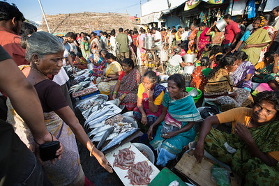 A reatail fish market known as Kasimedu fishing harbour market located within the Chennai fishing harbour. Photo by Shannon Zirkle