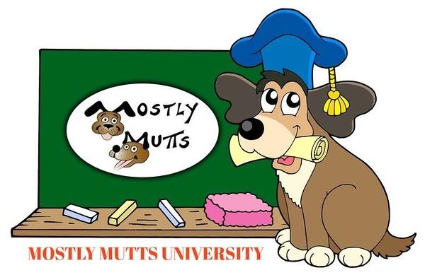 MM University