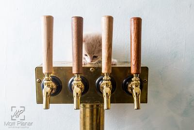 Abbey Cat Brewing-7614