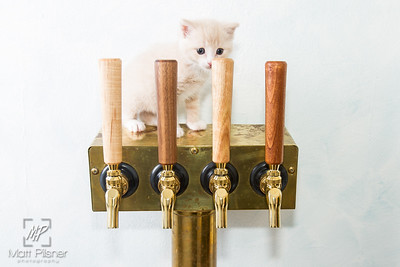 Abbey Cat Brewing-7618