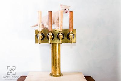 Abbey Cat Brewing-7620
