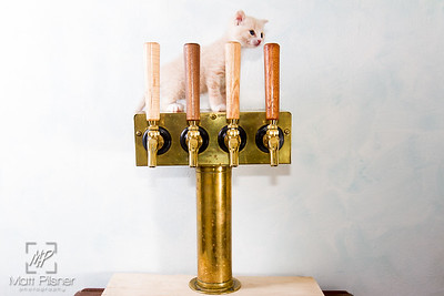 Abbey Cat Brewing-7622