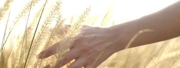 hand in wheat 24