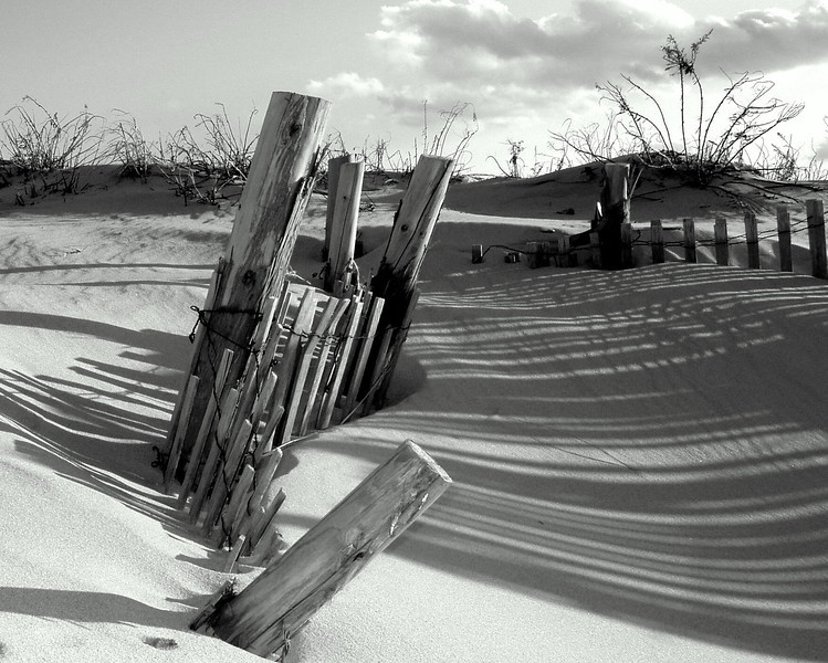 Jersey shore, Black and White