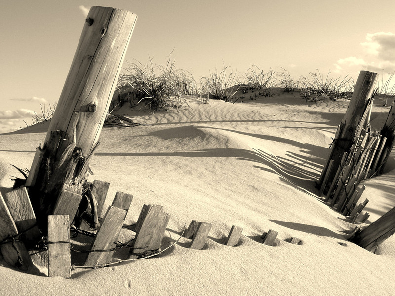 Jersey Shore 2, sepia