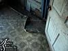 floor-with-door