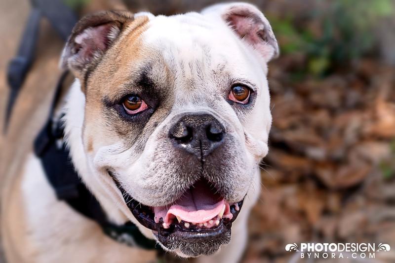 Orlando Pet Photography