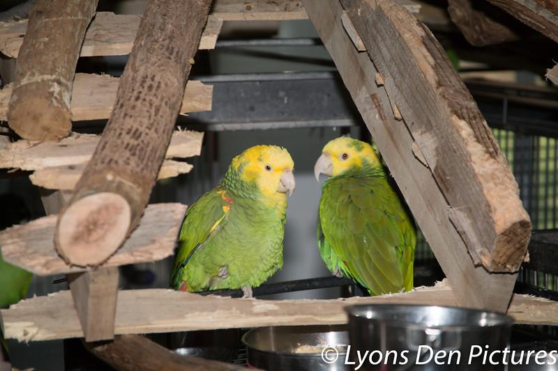parrots 2-30.jpg