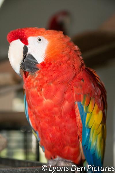 parrots 2-24.jpg