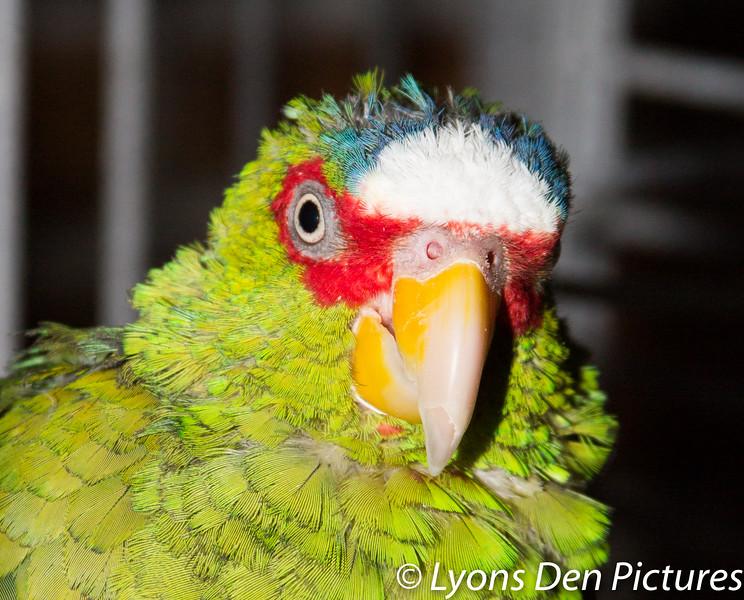 parrots 2-53.jpg
