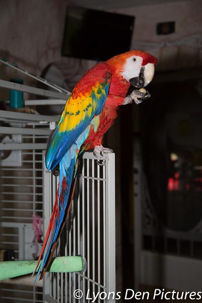 parrots 2-50.jpg