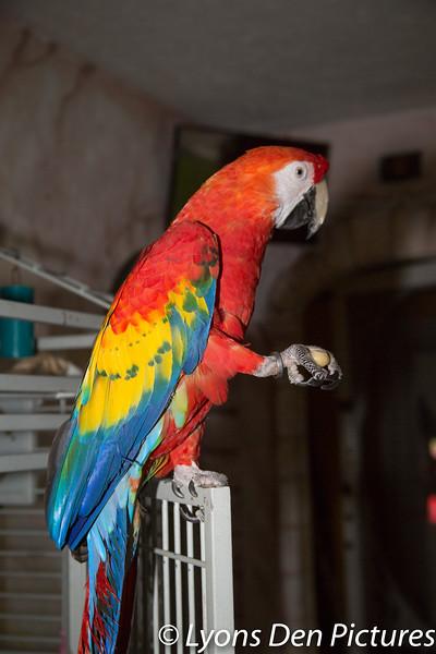 parrots 2-45.jpg