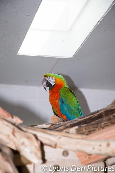 parrots 2-29.jpg