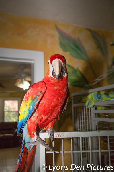 parrots 2-6.jpg